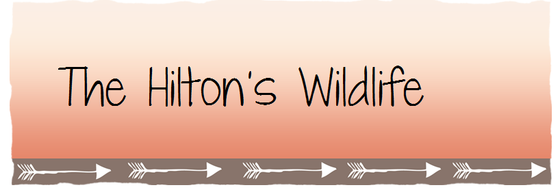 The Hilton's Wildlife
