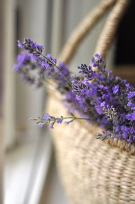 lavanda en cesto