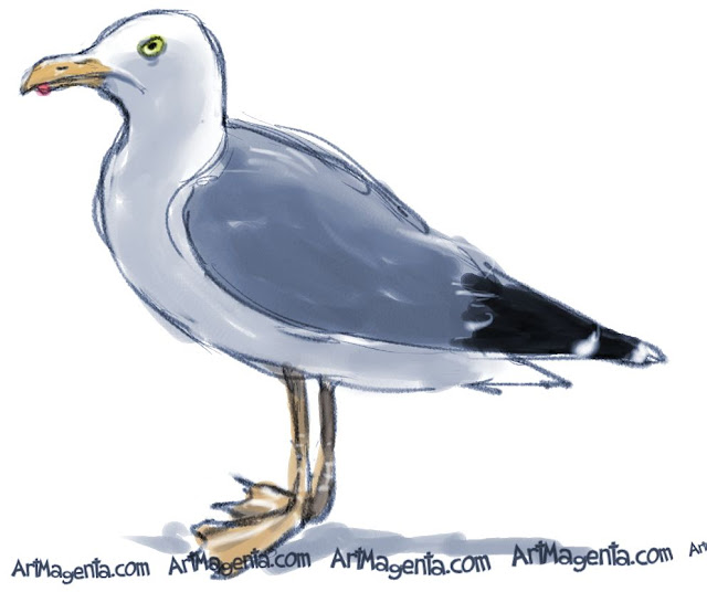 European Herring Gull sketch painting. Bird art drawing by illustrator Artmagenta.