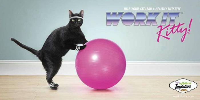 Whiskas cat food Help your cat to live a healthy lifestyle.