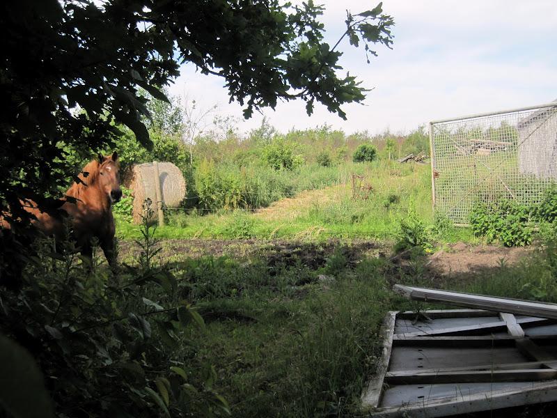 Landbohaven: ja vi har en bondegård...
