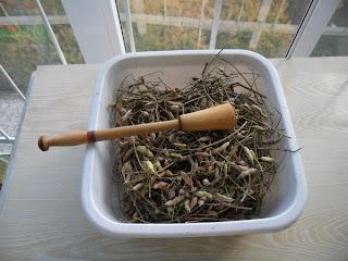 Извлечение семян редиски, подготовка
