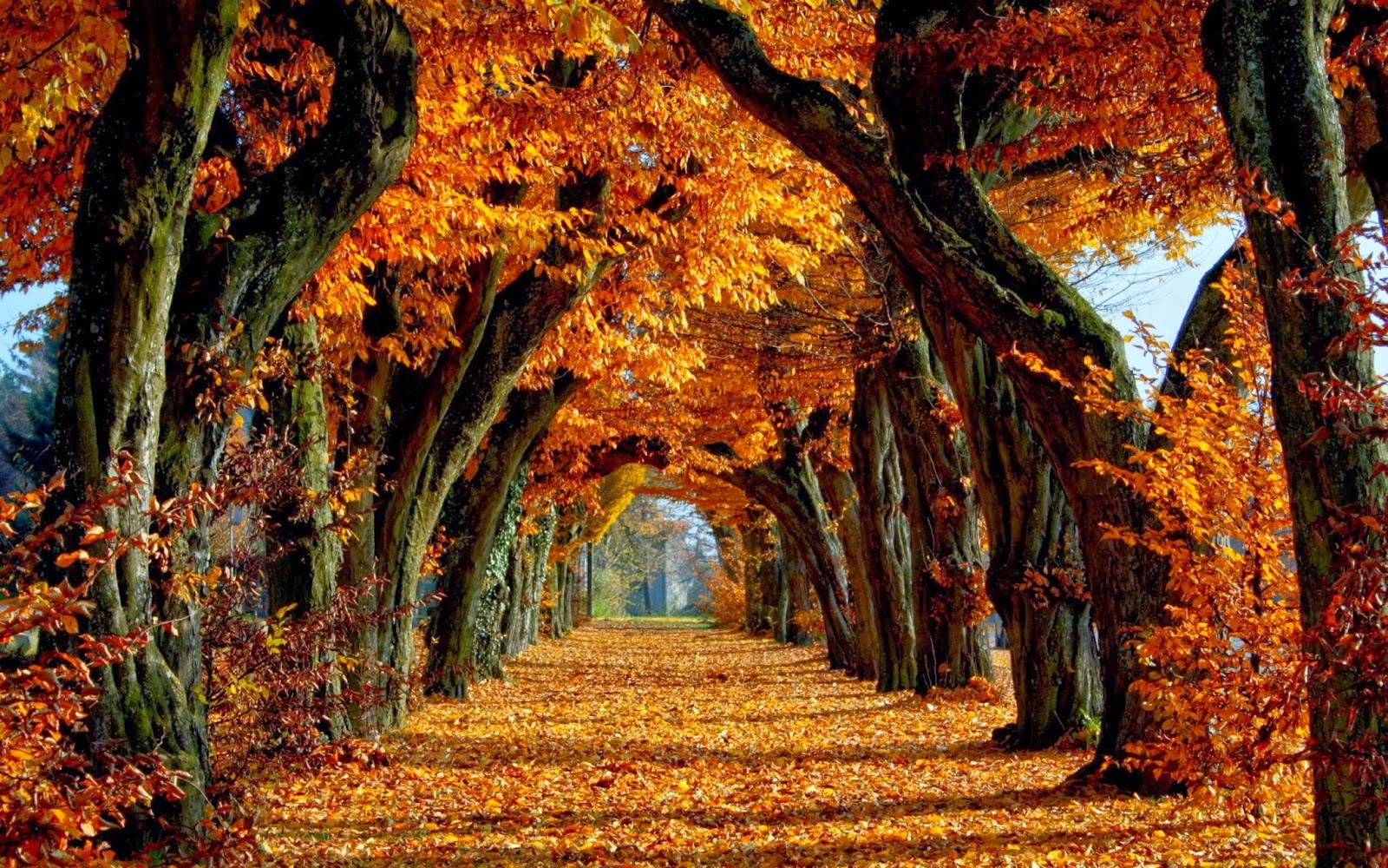 in autumn desktop - photo #13