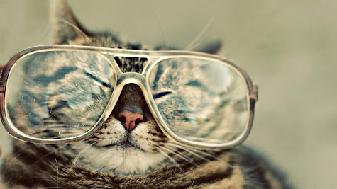 Cat funny face glasses animal hd wallpaper