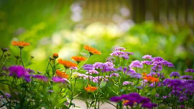 Baixe grátis papel de parede da natureza flores da primavera em hd 1080p. Download flowers wallpapers and nature flowers desktop backgrounds, images in hd widescreen high quality resolutions for free.