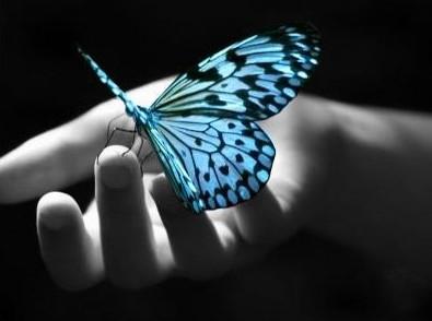 http://3.bp.blogspot.com/-EOcJ0QhEYKA/UL9JGqmAUoI/AAAAAAAAANU/PrkhBgC0kLU/s1600/papillon.jpg