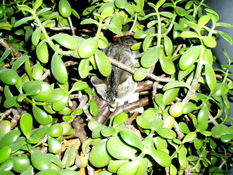Common House Plant Diseases Common House Plants Plants