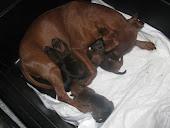 Sono nati i cuccioli il 26 settembre 2011