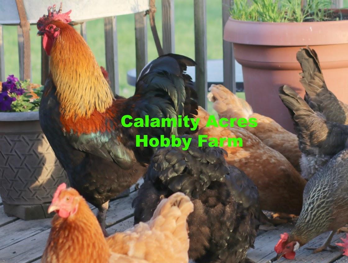 Calamity Acres Hobby Farm