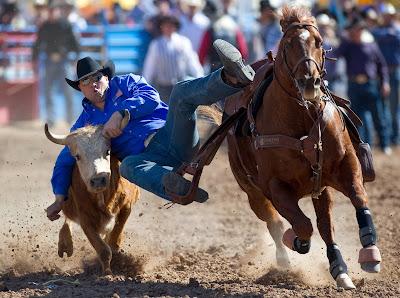 Arizona, Tucson, Bull, Horse, Run, Stee,r Wrestling, Competition, Tucson, Rodeo La Fiesta, Jason Miller, Participate,