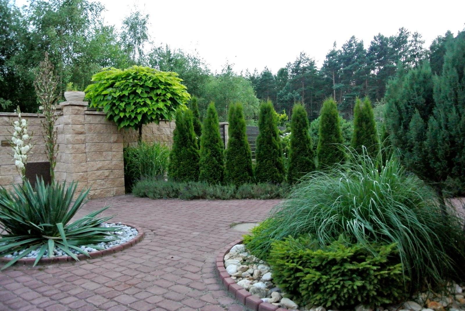 catalpa,ogród,garden,szpaler tuji,lawenda w ogrodzie,łany lawendy,yucca,juka kwitnie,ładny mur,ogrodzenie systemowe