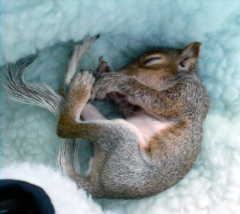 The News For Squirrels Have You Found A Baby Squirrel