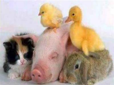 Ver Imagenes Tiernas De Animales