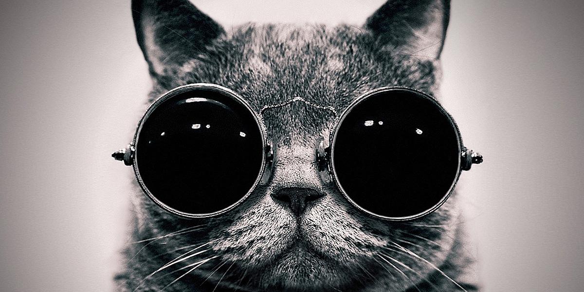 Glasses Cat 300+ Muhteşem HD Twitter Kapak Fotoğrafları