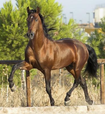 imágenes-de-caballos