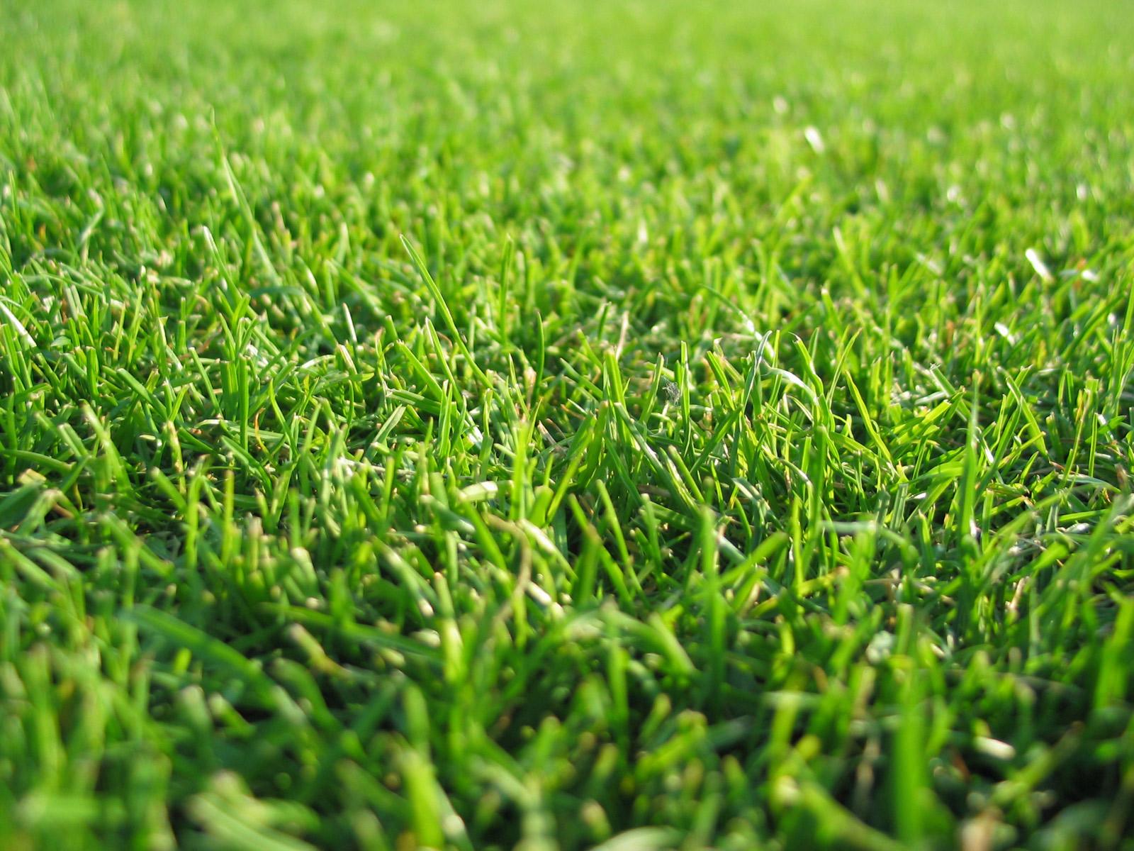http://3.bp.blogspot.com/-EQApFqszaHg/Te7aZ5F3vyI/AAAAAAAACqA/Jtzc2gbOu3s/s1600/grass%2Bwallpaper%2B5.jpg