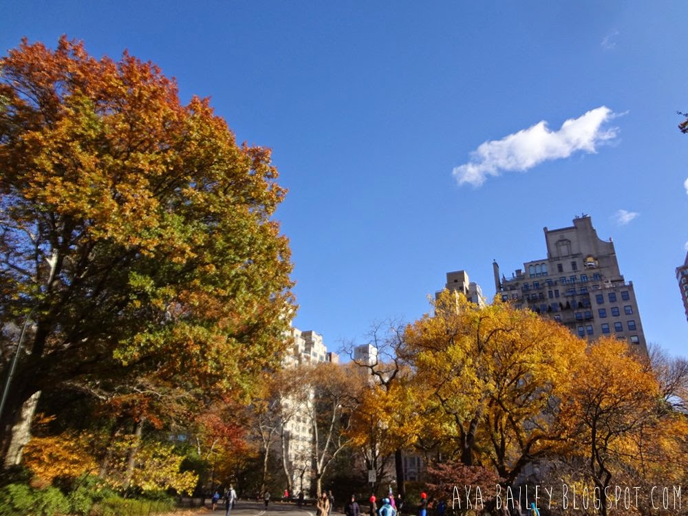 Foliage and buildings around Central Park in the fall