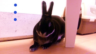 テーブルの影でくつろぐうさぎ、ミニレッキス