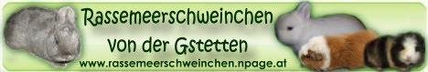 Rasssemeerschweinchen aus Gstetten in Stadt Haag