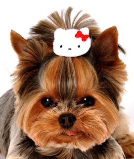 Hello Kitty pet dog hair clip accessory