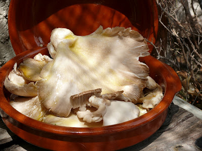 spanish garlic mushrooms in olive oil