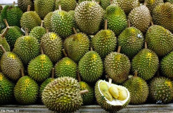 manfaat durian