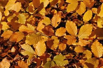 Mabon - Equinócio de Outono