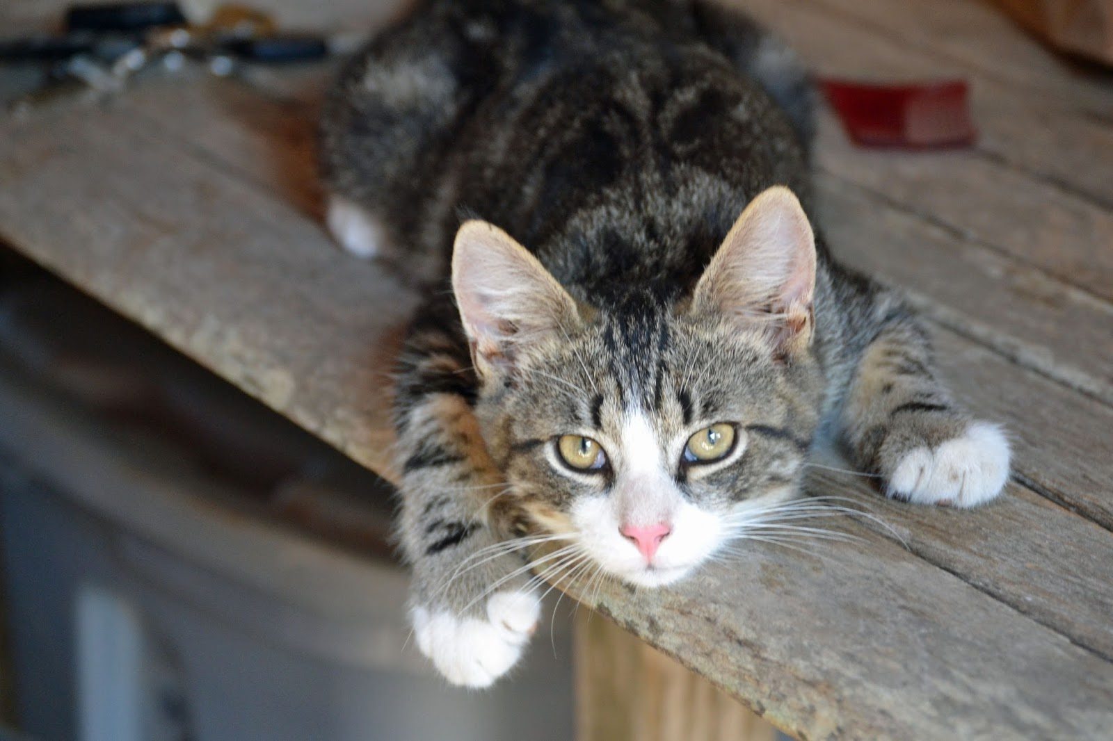 how to keep a barn cat from running away