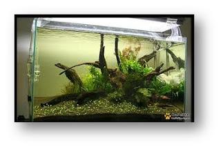 Interiors Discus Fish Aquarium