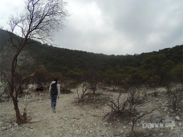 Hutan Mati di Kawah Putih