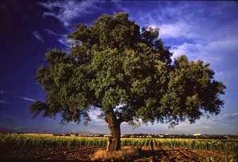Los árboles en los sueños