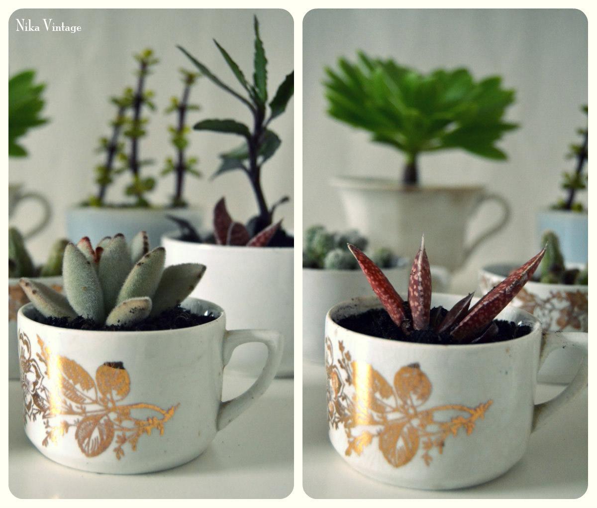 Diy tazas rotas antiguas cactus nika vintage - Cactus en macetas pequenas ...