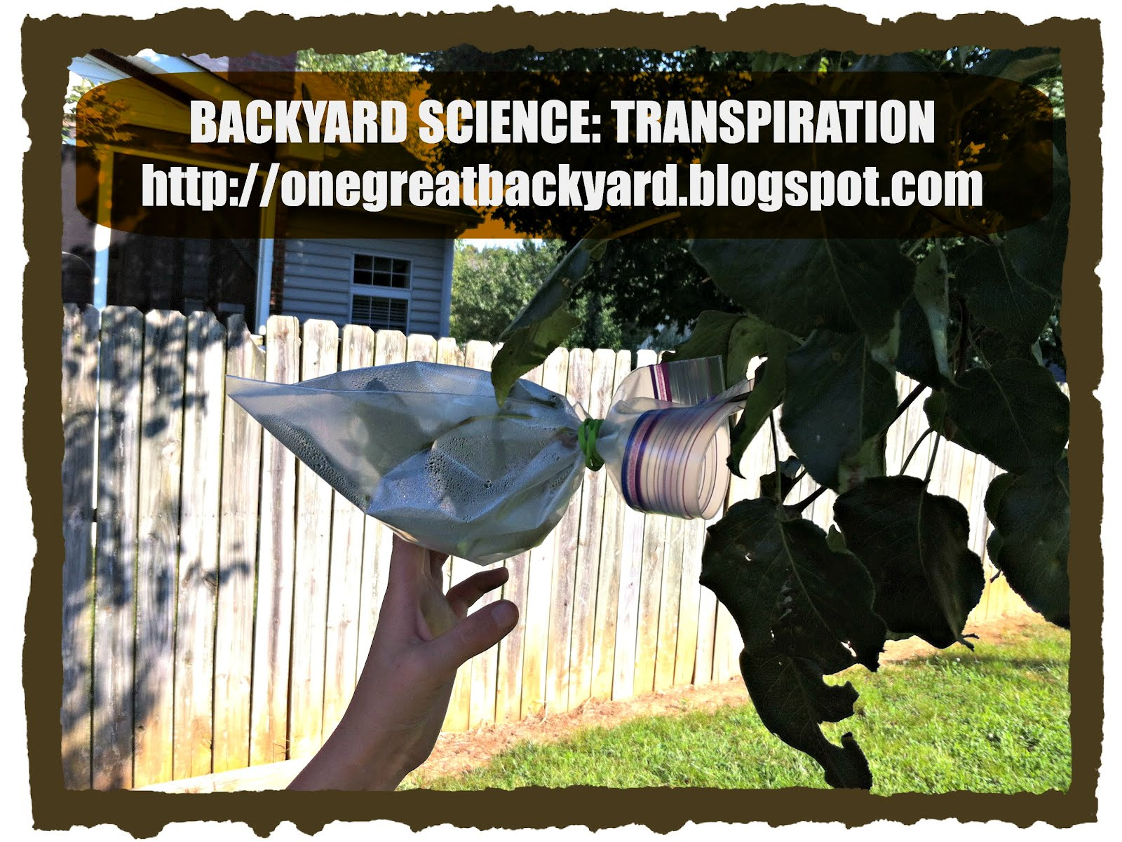 one great backyard get outside and play 9 backyard science