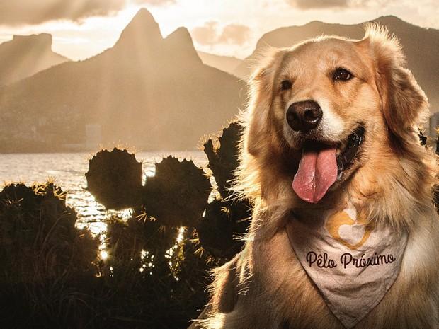 Projeto filantrópico faz calendário com fotos de cachorros em pontos do Rio (Foto: Pêlo Próximo/ Divulgação)