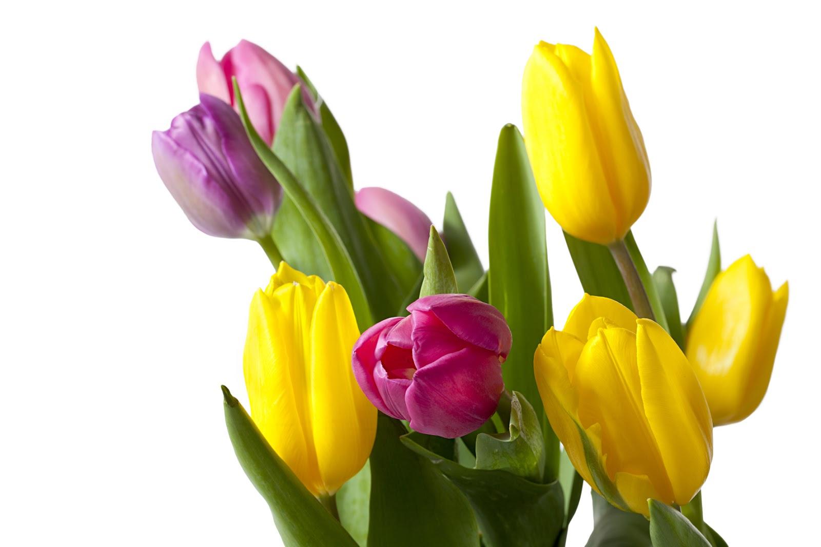 banco de im u00c1genes gratis  22 postales de flores para