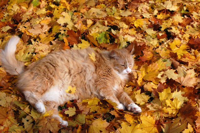 http://3.bp.blogspot.com/-ESpnquogmQ4/T_BgSPz43zI/AAAAAAAAF7s/Nrlwvd2Ac8A/s1600/Adorable+Felines+Having+A+Blast+In+the+Fall+Leaves+(8).jpg