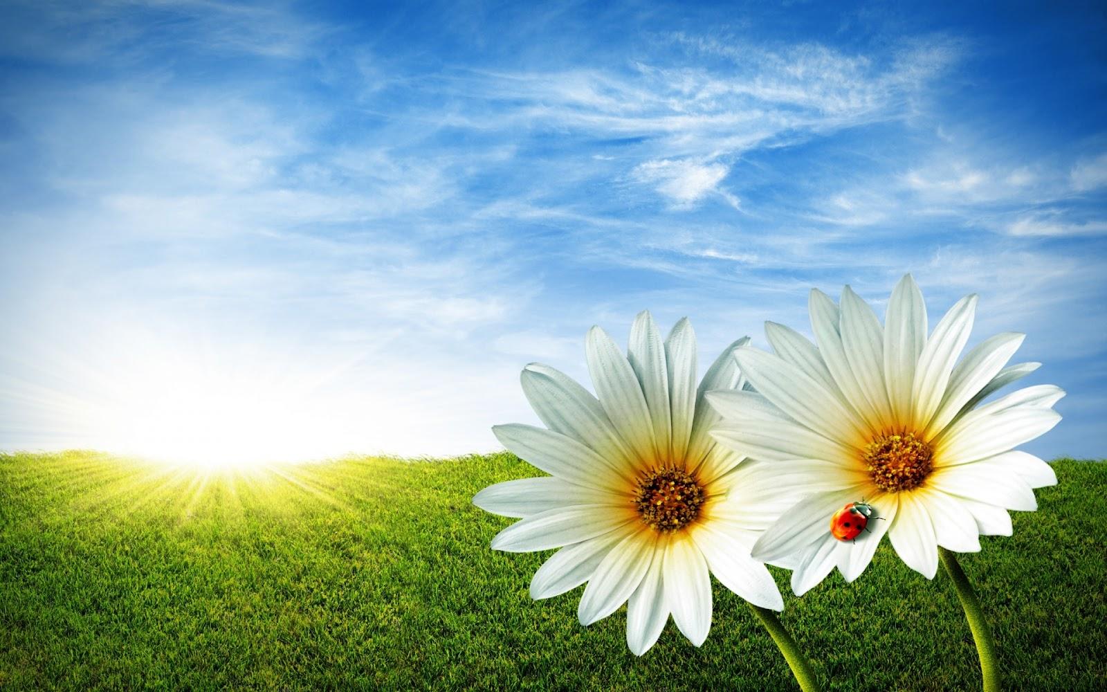 Flowers for flower lovers flowers background desktop for 3d white flower wallpaper