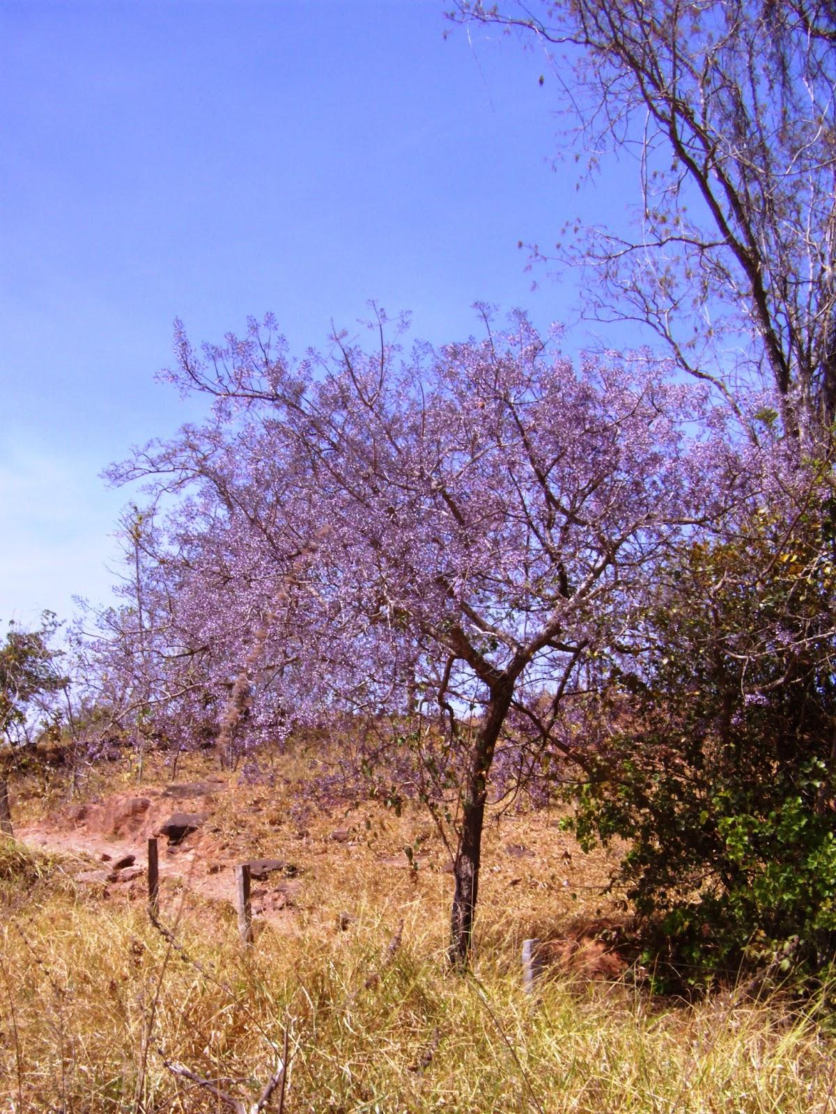 Plantas sobrevivendo à seca no Cerrado