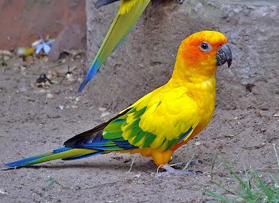Evde beslenebilecek papağan türleri