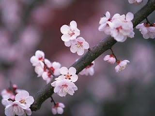 Flowers Garden Japan