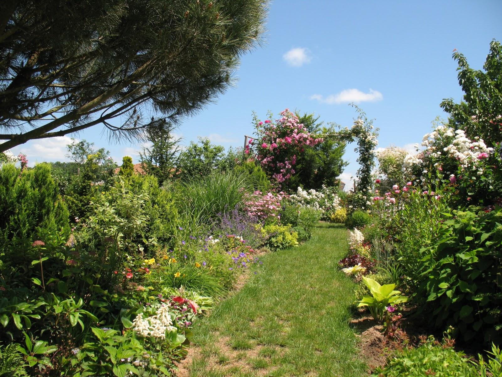 Roses du jardin Chêneland: Une allée fleurie