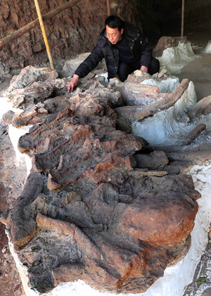 biggest-fossils-amazing-extinct-animals Dinosaurs Fossils in China