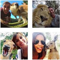 Como tirar selfie com animais