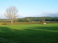 Magnífics camps a la plana de la Vall de Sant Tou