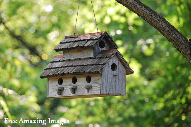 Free amazing images 26 best and most creative bird house for Best birdhouse designs