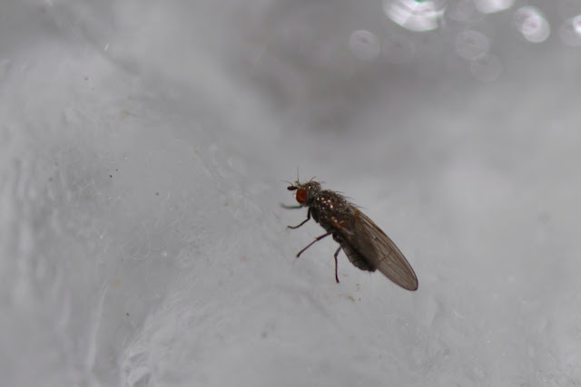 fly on ice in winter