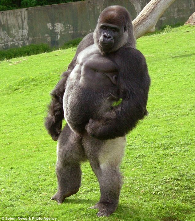 the food guru gorilla strength