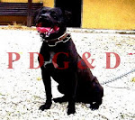 APBT MACHO - BLACK EXCALIBUR