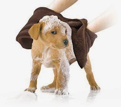 Lave seu pet em 8 passos