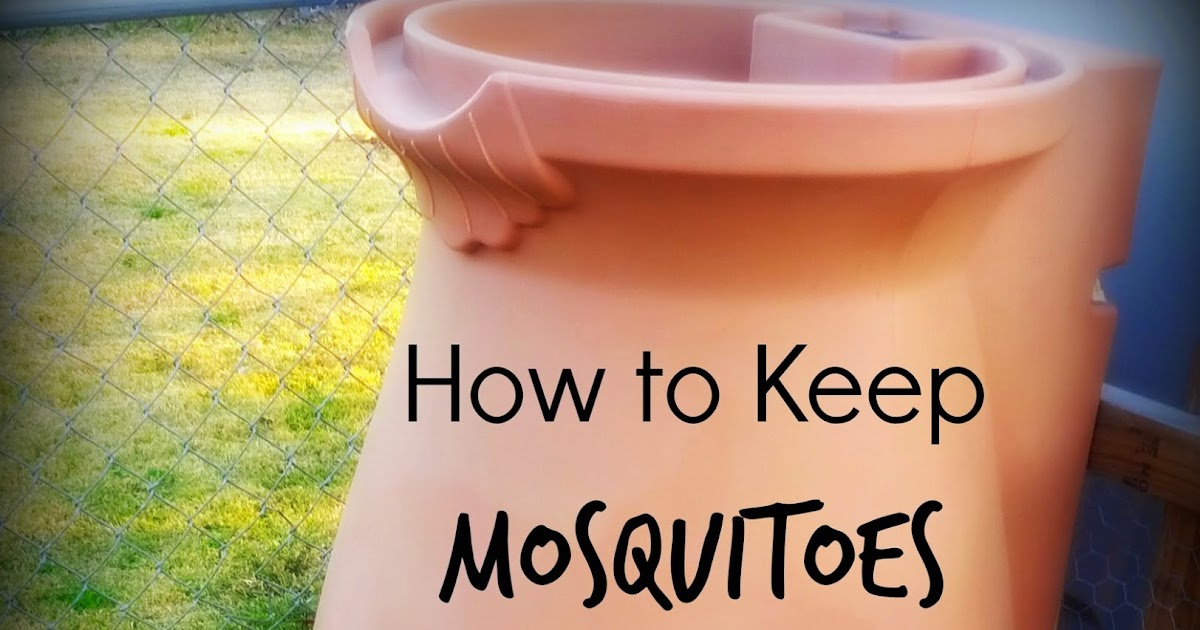 greneaux gardens how to keep mosquitoes from breeding in your rain